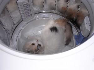 洗濯機が好き